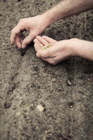 frontal portrait: Frontal portrait view of human hands planting spinach seeds into the ground.
