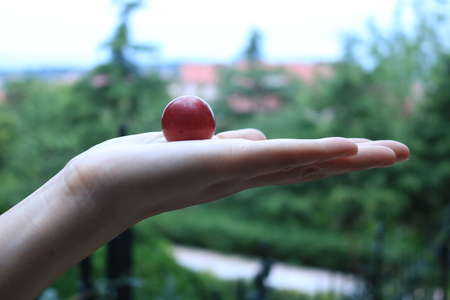 gules: hand holding the fruit