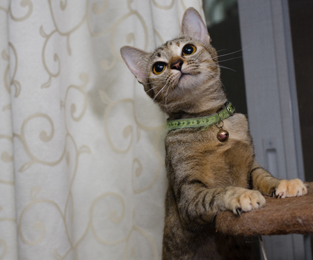 a lovely cat: A lovely cat stands on cat tower wants to play her toy