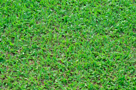 grass plot: Green grass texture - Natural background Stock Photo