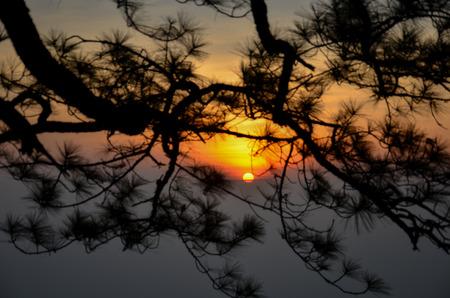 silueta humana: Salida del sol detr�s de �rboles en el Parque Nacional Phukradueng, Tailandia