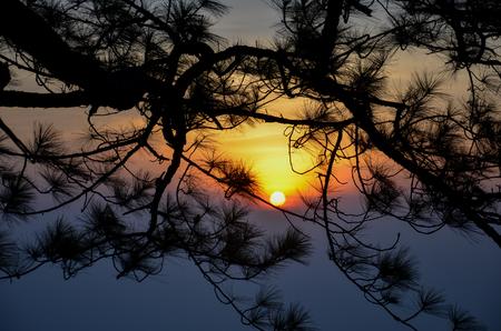phukradueng: Sunrise Behind tree at Phukradueng National Park, Thailand