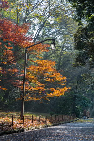 lamp shade: Couple walking on the path in the park in autumn with red maple trees and street lamp Stock Photo