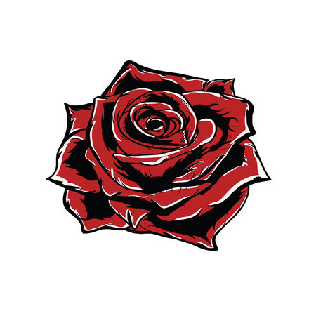 Vector red rose isolated on white background photo