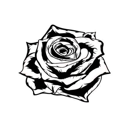 Black and white rose. Illusztráció