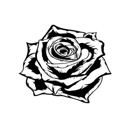 Black and white rose. Illustration