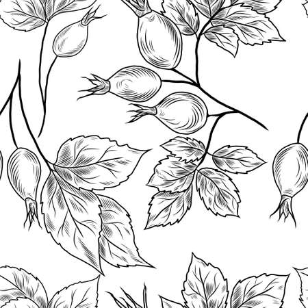 Seamless hand-drawn pattern with black line rose-hip plant, leaves, branches, foliage
