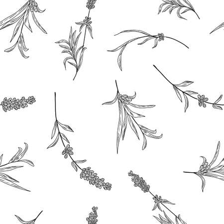 Seamless hand drawn pattern with lavender branches and flowers