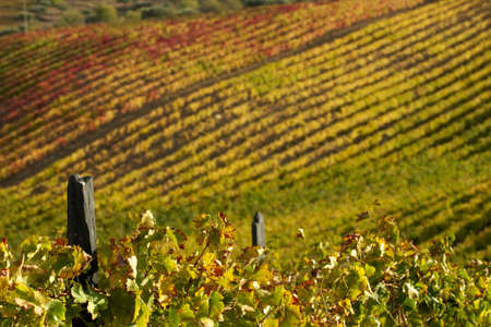 Vineyards in the Douro valley, Portugal