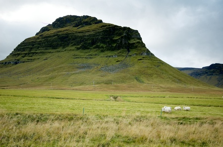 Sheep at Icelands countryside Stock Photo