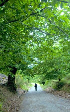 national scenic trail: Man walking under oak tree