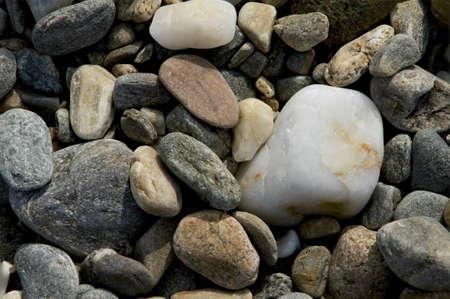 quartzite: Sea shells on a beach at Ireland