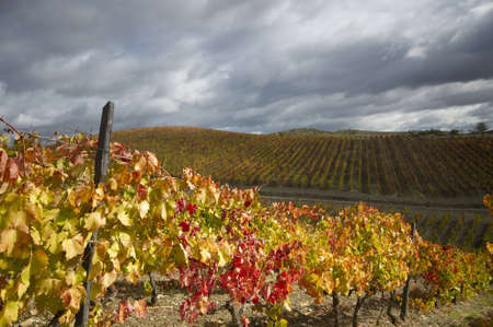 Vineyard in full autumn colors at Douro valley, Portugal photo