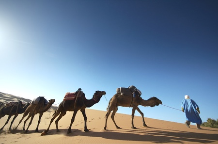Camel caravan walking over sand dune at photo
