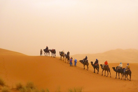 Camel caravan at a dune during a sand storm Stock Photo