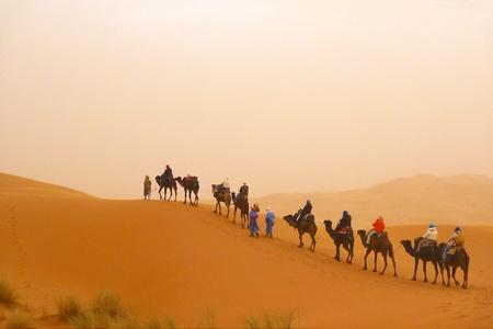 Camel caravan at a dune during a sand storm Stock Photo