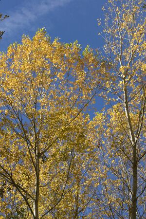 Trees in Autumn colors against blue sky