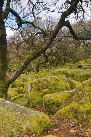 Moss covered rocks at Wistmans Wood Stock Photo