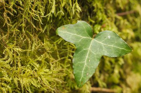Vegetation grown on a wood of Exmoor