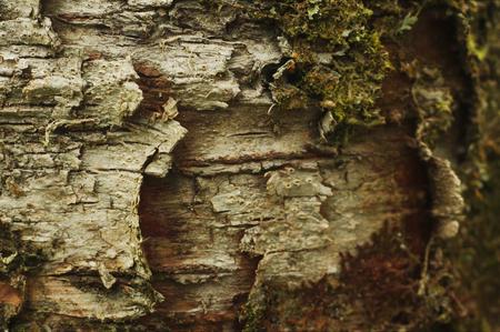 exmoor: Detail of bark of tree at Exmoor