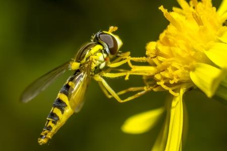 slight: Portrait of a fly