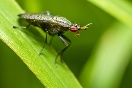 gadfly: Portrait of a young gadfly