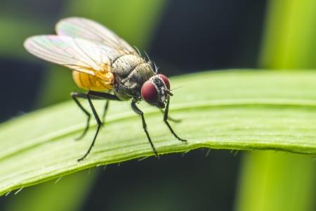 esplicito: Ritratto di una mosca Archivio Fotografico