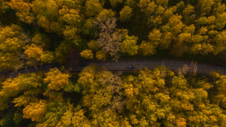 the car quickly drives along the road through the autumn yellow forest on which the suns rays fall Stock fotó