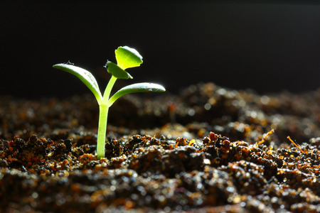 Successful seedling growth Stock Photo