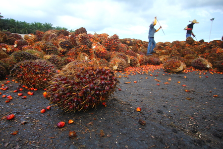 Oil palm industry workers in background Imagens