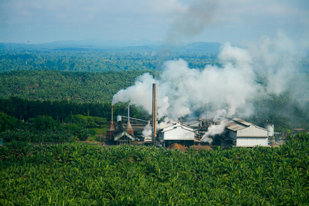Palm oil mill within oil palm plantation Editorial