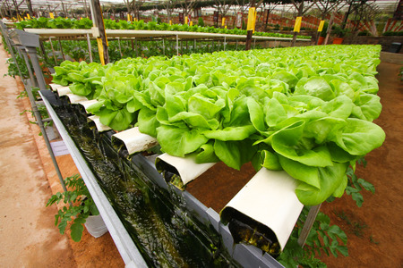 Hydroponic agriculture technology photo