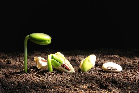 crecimiento personal: Crecimiento de las pl�ntulas