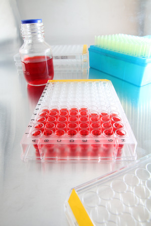 biomedical research: Well plate with samples loaded for analysis