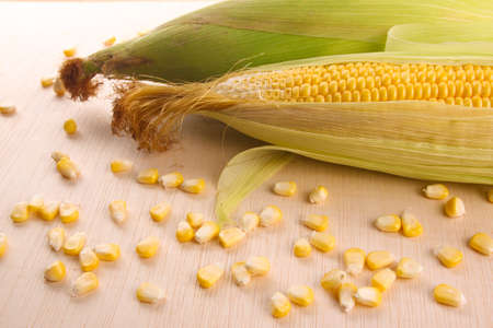 maize cultivation: Corn maize and grain on wooden surface Stock Photo