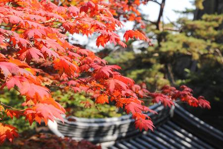 서울시 한국 서울에 인접한 북 한산 국립 공원의 붉은 단풍. 스톡 콘텐츠