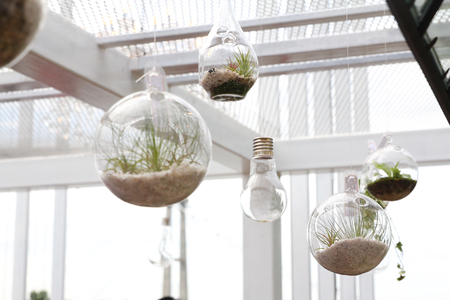 Hanging terrariums with plant in indoor environment