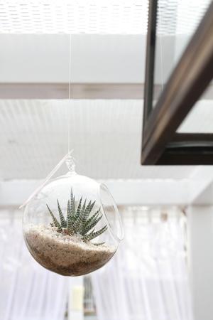 Terrarium with Haworthia plant used as hanging indoor decoration Stock Photo