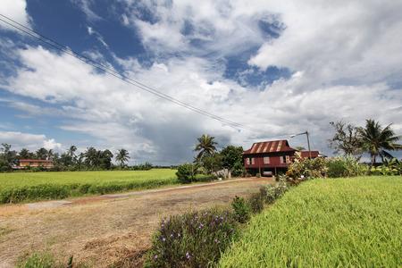 青空と雲の下の水田における農村住宅