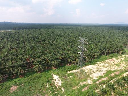 electricity export: Grid electricity through oil palm plantation