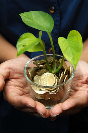 capital gains: Business concept of financial growth with hands holding glass with plant growing from coins