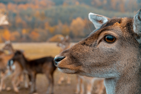 Head of a deer in the forest