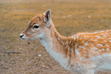 young deer in a wildlife park