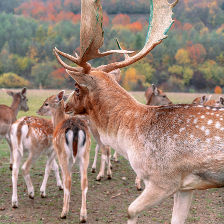 Group of deer in the forest
