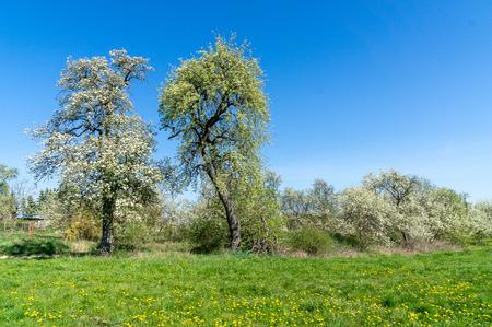 Landscape with meadow and trees - blue sky Zdjęcie Seryjne
