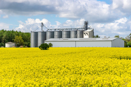 oilseed rape with farm buildings and silos in the background - clouds in the sky Zdjęcie Seryjne