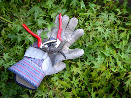 Hand snippers with gloves on clippings