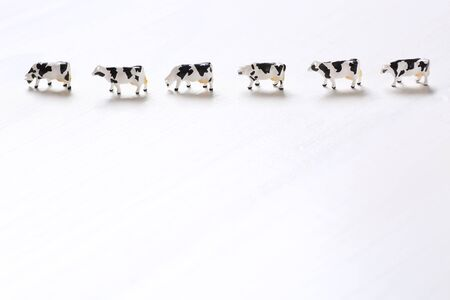 Small cow toys in a row 스톡 콘텐츠