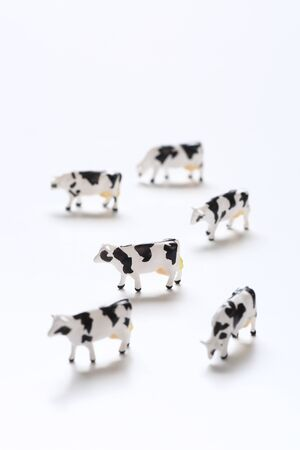 small cow toys on white background