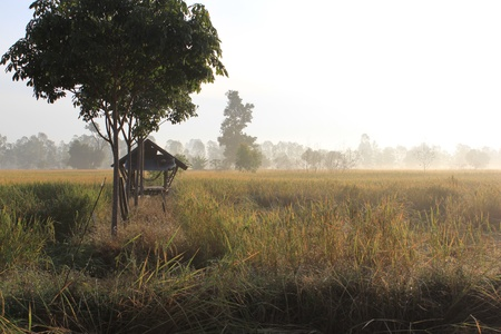 Rural the morning in winter in Thailand Stock Photo
